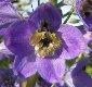 [Blume]