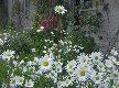 [Blumen vor dem Gutshaus]